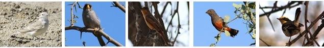birds_issue 12